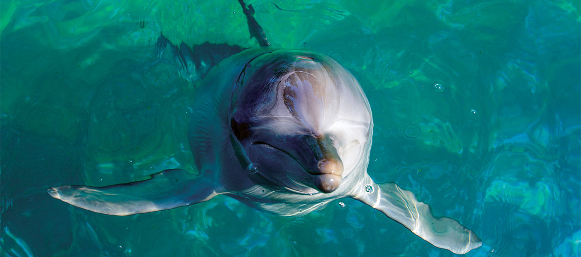 Port Stephens dolphin